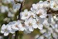 カルシウムの木の花