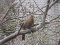 中国からやってきた花木、鳥