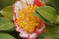 わが家の庭(黄色い花)