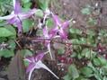 カランコエの挿し芽など