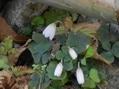 植物観察会(1)