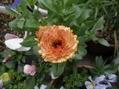 今朝の花達