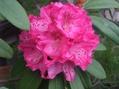石楠花、草木瓜、椿・風車