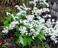 白い花-2
