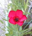 この花の名前、わかりますか?