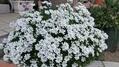 優しく咲く花達