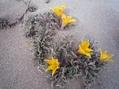 極寒の地に咲く①