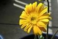 今日の花便り~②