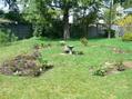 息子の庭作り