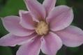ぞくぞく開花