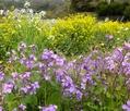 庭と畑の花