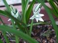 白い花 (1)