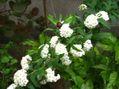 母の210円のお花