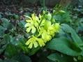 今の時期は黄色のお花が満開です( *´艸`)