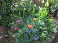 今朝の庭の様子