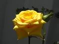 元気の黄色!
