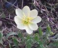 教えて下さい。花の名前。ウォーキング80日目