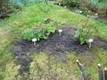 雨が来る前に庭仕事