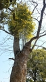 [i:252]気になる木