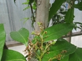 ランと熱帯果樹