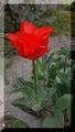 開花ラッシュⅣ