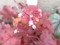 小さなお花たち。