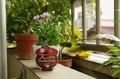 【花チャレ投稿イメージ】ダイアンサスを鉢いっぱいに咲かせるチャレンジ