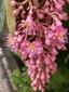ピンクのシャンデリアが幾つも見られました。o(^▽^)o