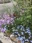 種蒔きから開花に挑戦