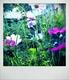 wildflower_shgc