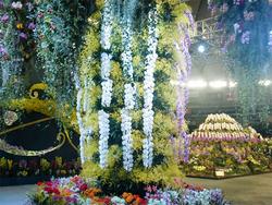 多種多様なランに包まれた華やかな空間を演出し、来場者を迎えるオーキッド・ロード