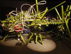 2017年「クリスマスローズの世界展」では、クリスマスローズを題材にした、いけばな草月流による作品など多彩な展示が予定される