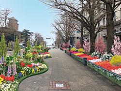 「日本大通りフラワーフェスタ」(イメージ)テーマフラワーであるチューリップとバラを中心とした、華やかでオシャレな花たちが大通りの両側400mにわたって彩りを添えます。