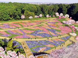 「横浜の花で彩る大花壇」(イメージ)。横浜市内産のパンジー、ビオラやペチュニア、チューリップ、サクラをはじめ春を代表する花々がお出迎えします