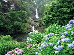 「第29回見帰りの滝あじさいまつり」(6/10~7/2)