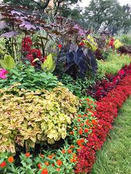 「ゴージャス 秋の饗宴ゾーン」。黒と赤とのコントラストがゴージャスな雰囲気を醸し出している