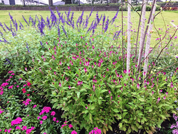 「ロマンチックプリティ ときめきゾーン」。繊細な草姿でピンクやうすいブルーの花が並び、やわらかな雰囲気が漂う