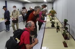 盆栽は海外のファンがますます増えている(昨年の24回秋雅展より/写真提供:秋雅展実行委員会)