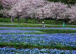園内各所で計1,600本のサクラが楽しめる(見ごろ:3月末~4月上旬)