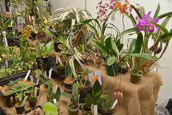 会場に並ぶのは熱帯植物が中心だが、ほかにも伝統園芸植物や植物の種子、パルダリウムなどの資材やボタニカルアートなども扱われる