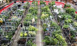 FAJに運び込まれた大小それぞれの観葉植物や多肉植物。個性的なものばかりだった(写真提供:フラワーオークションジャパン)