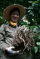 見どころを教えてくれたガーデナーの梅村慎太郎さん。手に持っているのはショクダイオオコンニャク