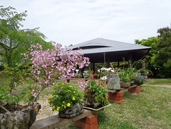 和の花展の会場の様子