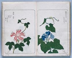 あさがほ叢 1817(文化14)年刊 国立歴史民俗博物館蔵