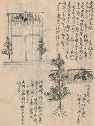 江戸庶民の正月の松飾りについて記している「守貞謾稿巻之二十六」(国立国会図書館デジタルコレクション)