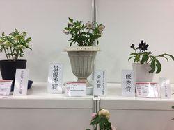 毎回、来場者が注目する新花コンテスト(写真は昨年の展示)