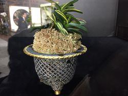 その昔、江戸園芸が熱狂した富貴蘭。「至宝の蘭」コーナーに展示