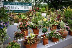 蓼科高原 バラクラ イングリッシュ ガーデンで10月6日~11日に行われる「寄植えの芸術展」。写真は昨年の風景