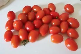 トマトの種から 6月29日