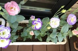 初めてのトルコギキョウ、頑張る❗️ たくさん咲いてます🌟